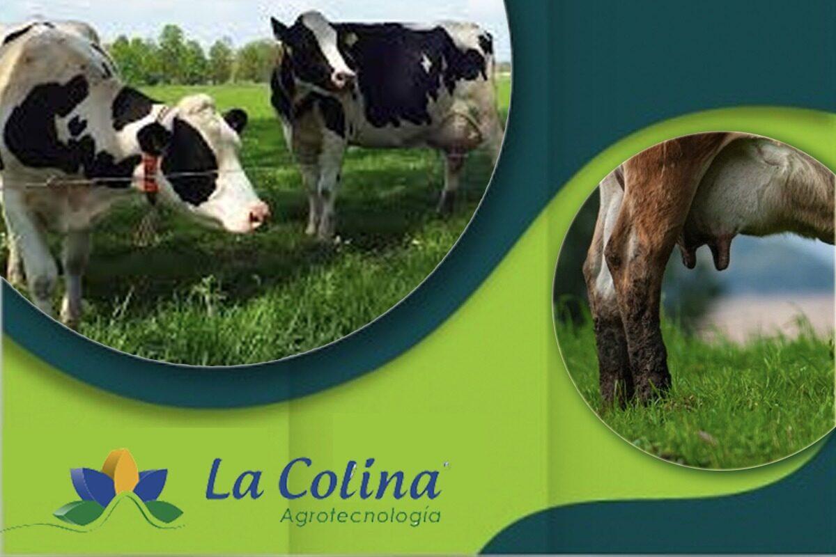 Industria Láctea Ecuador La Colina