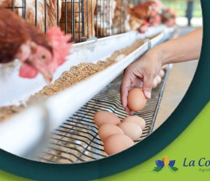gallinas ponedoras alimentación La Colina Ecuador