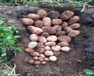 Re mineralización de suelos La Colina Ecuador