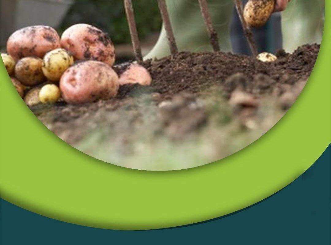 Fertilizante de cultivo de papa Ecuador La Colina