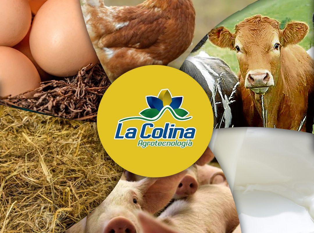 La Colina Ecuador Producción de huevos