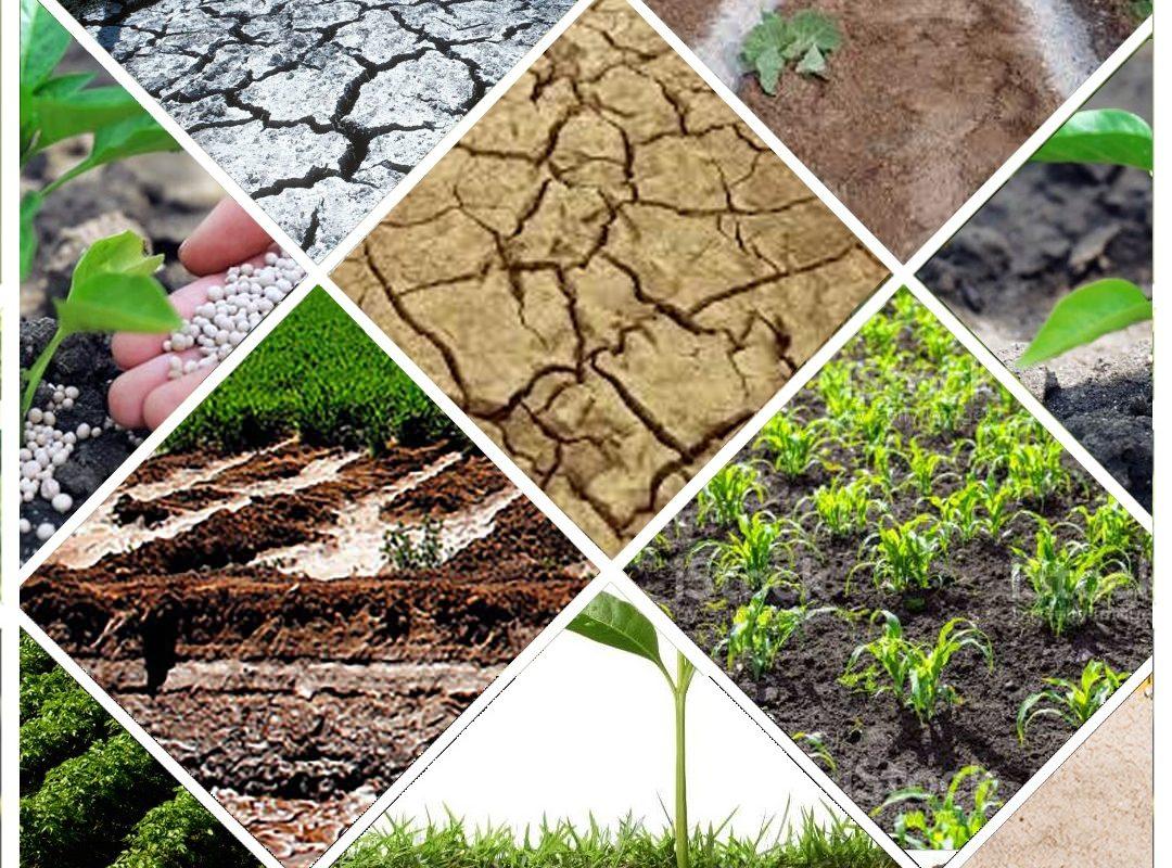 Manejo de suelos, interpretación, caso particular de salinización y sodificación
